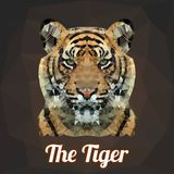 Polygon Vector Tiger Head Royalty Free Stock Photo