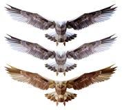 Polygonal bird flies Stock Photography