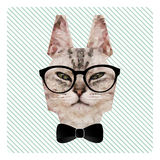 Polygonal Fashion Portrait of Hipster Cat in Glasses and Bow Tie Stock Photography