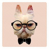 Portrait of Hipster Cat on Pink Stripes Backgr Stock Photo