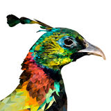 Polygonal himalayan monal. Vector illustration. Stock Photos