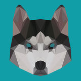 Polygonal husky background Royalty Free Stock Photography