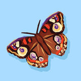 Polygonal and large beautiful butterfly on a blue background.  Royalty Free Stock Photography