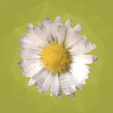 Polygonal mosaic of daisy vector illustration Royalty Free Stock Images