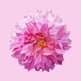 Polygonal pink dahlia flower, abstract flower, vector Royalty Free Stock Images