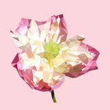Polygonal pink lotus, polygon triangle flower,  vector. Abstract illustration Royalty Free Stock Images