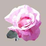 Polygonal pink rose, polygon geometric flower, vector Royalty Free Stock Image