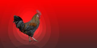 Polygonal Rooster leghorn cock on the red background. Polygonal Rooster cock leghorn on the red background with red egg and bird footprints. Left side and copy Royalty Free Stock Images