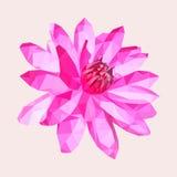 Polygonal rosa lotusblomma eller näckros, geometrisk blomma för polygon Royaltyfria Bilder