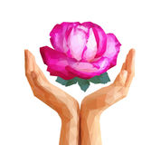 Polygonal rose full-color in cupped hands Stock Image