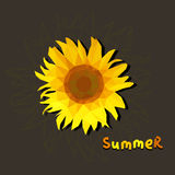 Polygonal sunflower on a brown background with text summer Stock Photos