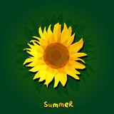 Polygonal sunflower on green background with text summer. square Stock Photo