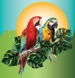 Polygonal teckning för illustration av två arafåglar stock illustrationer