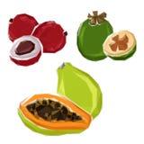 Polygonal tropical papaya, feijoa, lychee fruits Stock Image