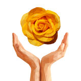 Polygonal yellow rose on cupped hands Royalty Free Stock Photography
