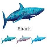 Polygonale Haifisch-Vektor-Illustration Stockfotos