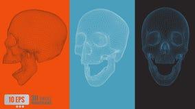 polygonales Vektor 3D wireframe grafischer Schädel in der verschiedenen Ansicht Lizenzfreies Stockbild