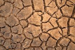 Polygons of desiccation caused by drought Stock Photos