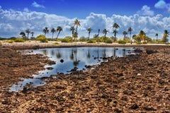 Polynésie française Zones et palmiers de corail Photographie stock