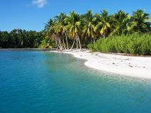 Polynesian Royaltyfria Bilder