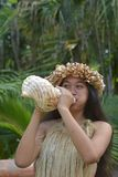 Polynesian Cook Islander woman blowing conch shell in Rarotonga. Cook Islands. Real people Copy space royalty free stock photography
