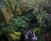 Polynesian garden with waterfall royalty free stock photo