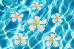 Polynesian pool with frangipani flowers Royalty Free Stock Image