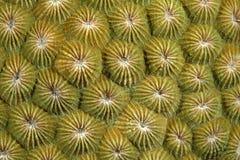 Polypes de corail Image libre de droits