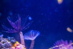 Polypes marins d'invertébrés photo stock