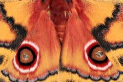 Polyphemus Moth Royalty Free Stock Image