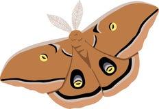 Polyphemus Silk Moth Royalty Free Stock Photography