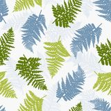 Polypodiophyta. Seamless pattern with ferns. Background with plants in red, blue and gray colors. Vector illustration Stock Images