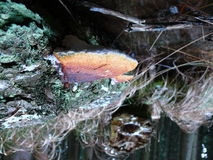 Polypore. Evening detail in bohemian forest Royalty Free Stock Photo