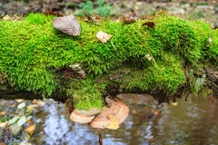 Polypore growing on a log Stock Photo