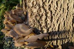 Polypore sul troncone Immagini Stock