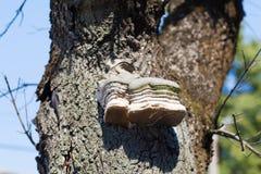 Polypore sur l'arbre Images stock
