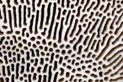 Polypore textur Arkivfoto