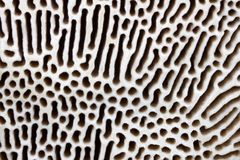 Polypore texture Stock Photo
