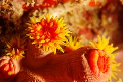 Polyps - Andaman Sea Stock Photos