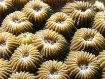 Polyps coralinos imagen de archivo libre de regalías