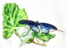 Polytes Papilio бабочки Стоковое Изображение RF