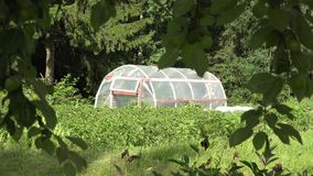 Polythene greenhouse in garden and apple tree branches move in wind. 4K stock video