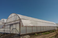 Polythene Greenhouse Stock Photos