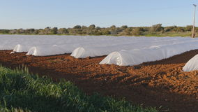 Polythene tunnel as a plastic greenhouse in an allotment with growing vegetables at sunset. stock video footage