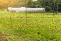 Polythene tunnel handmade greenhouse Royalty Free Stock Photo