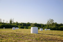 Polythene wrapped grass bales fodder for animal Stock Photos