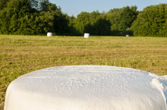 Polythene wrapped grass straw bales. Animal fodder Stock Photos