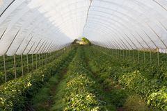 Polytunnel Image stock