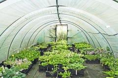 Polytunnel con le piante Immagini Stock Libere da Diritti