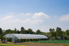 Polytunnel Greenhouse Stock Image